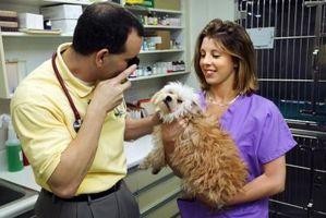 Vacunas de cachorro de bajo costo en Texas