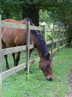 Beneficios de los suplementos de levadura de caballo
