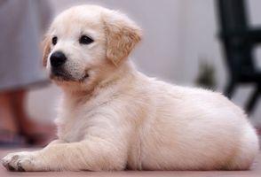 ¿Está bien que su nuevo cachorro dormir en un cajón?