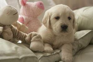 Signos digeridos de un cachorro juguete relleno