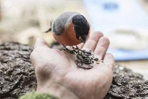 Cómo adoptar un pájaro gratis