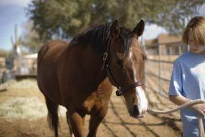 A Halter romper un caballo más viejo