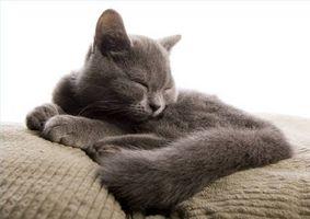 Tratamientos de la artritis para gatos