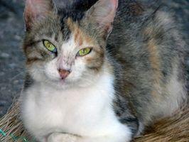 Cómo deshacerse del olor de las heces de gato en casas