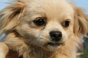 Vacunas de cachorro anual requeridas en Arizona