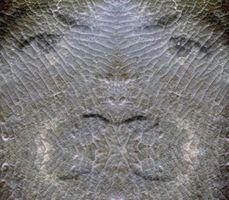 ¿Cómo se causan ilusiones ópticas?