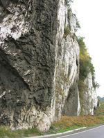 Tipos de fósiles de piedra caliza