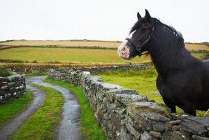 Consejos para llevar un caballo en un remolque en un viaje de largo recorrido