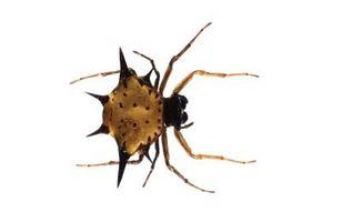 """Cómo tener un insecto en """"Spore"""""""