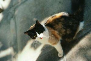 Cómo deshacerse de los gatos y gatitos debajo de un porche