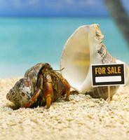 Cómo eliminar cangrejos ermitaños de la cáscara sin matarlos