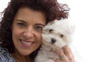 ¿Cómo escoger un buen cachorro de Bichon?
