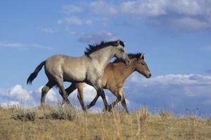 Causas de la grave extralimitación en un caballo