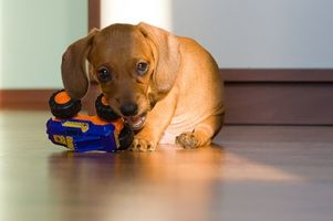 Síntomas de estreñimiento de cachorros