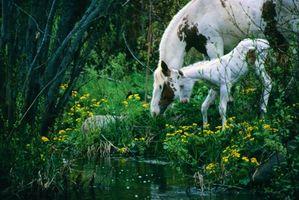 Hierbas para la fertilidad de la yegua