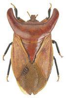¿Qué depredadores Kill Stink Bugs?