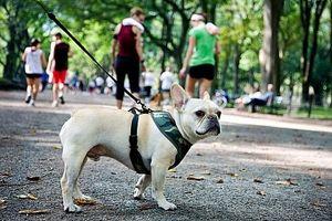 Cómo saber si una ciudad es Pet Friendly