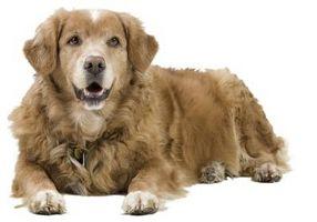 Cómo superar el miedo de los perros