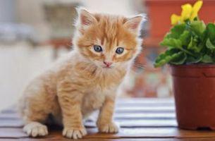Cómo estimular un gatito para defecar