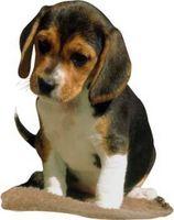 Cómo dibujar un cachorro de Beagle