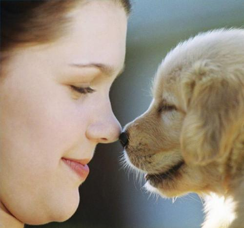 Cuando empezar a dar tratamiento preventivo contra dirofilariasis cachorros