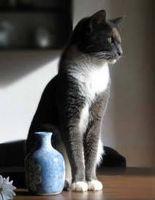 Trastornos de la piel de gato