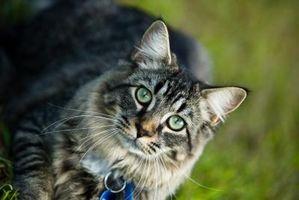 Cómo coger a un gato sin una trampa