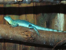 Cómo conectar una lámpara de calor en una jaula de lagarto