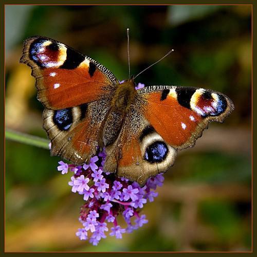Alimentos para las casas de mariposas