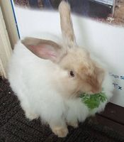 Tablas de la preparación de conejo