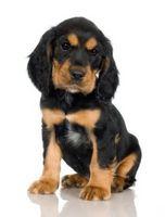 Camada libre caja consejos de entrenamiento para cachorros
