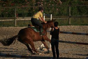 Cómo entrenar un caballo para corte