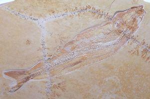 El proceso de sedimentación: la formación de fósiles