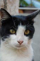 Norvasc efectos secundarios en los gatos