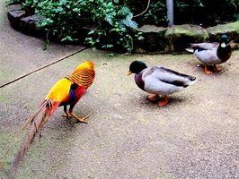 ¿Qué es el ciclo de vida de un ave del paraíso?