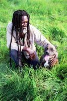 ¿Cómo saber si un Pit Bull cachorro es completo sangre?