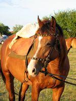 Los síntomas de úlceras en caballos