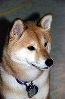 Vitamina B-6 para perros