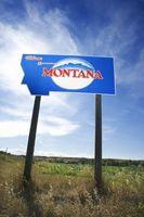 Arañas en la Montana del este
