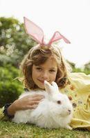 Acerca de conejos albinos